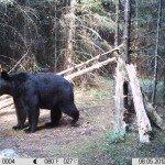 2012 trail camera