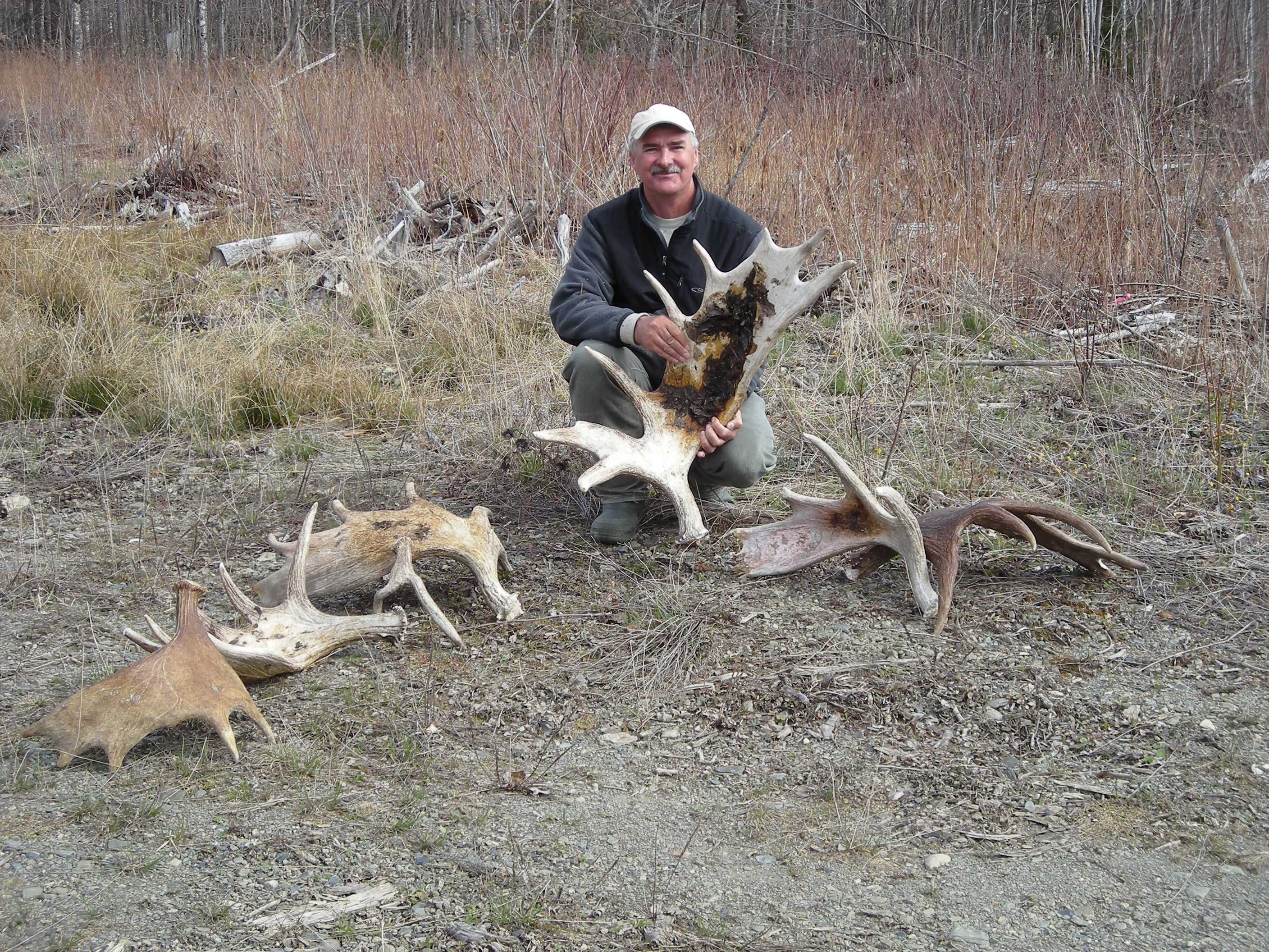 Maine Moose Antler Hunting Early Spring Allagash Guide
