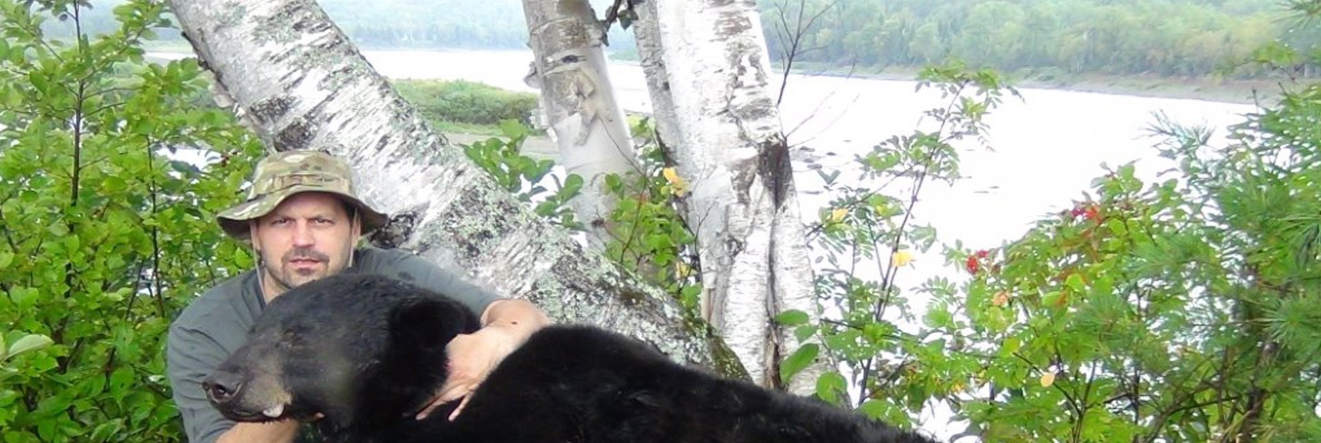 bear-banner