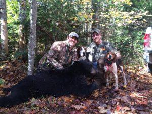 fall maine bear hunt with hounds