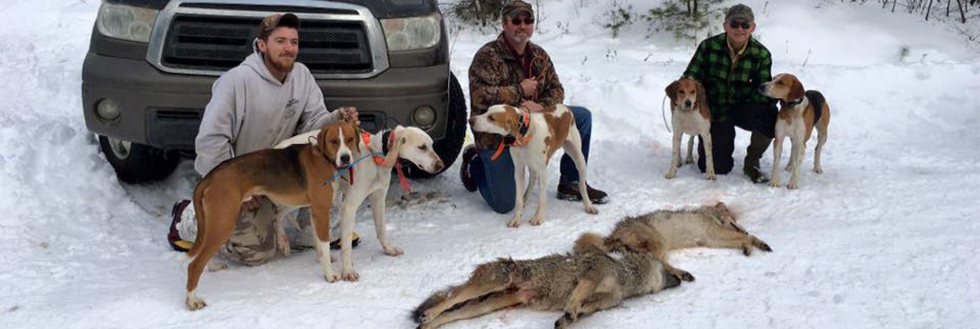 coyote-header