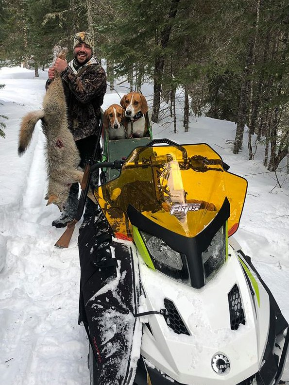 Guided Coyote Hunts in Maine